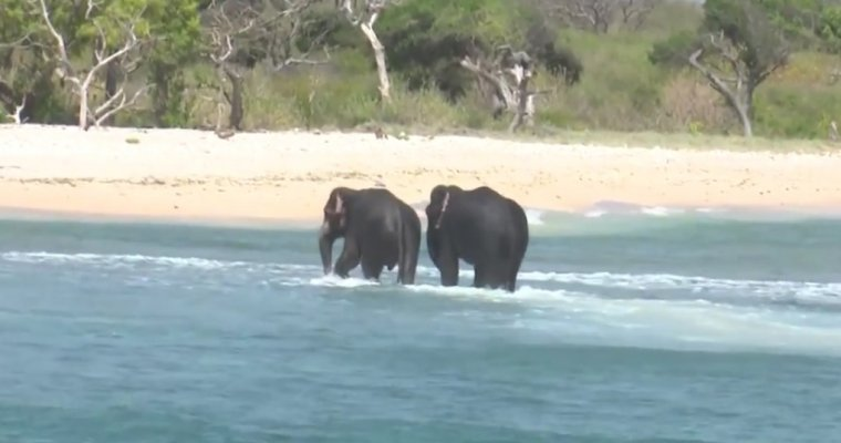НаШри-Ланке военные спасли изморя 2-х слонов