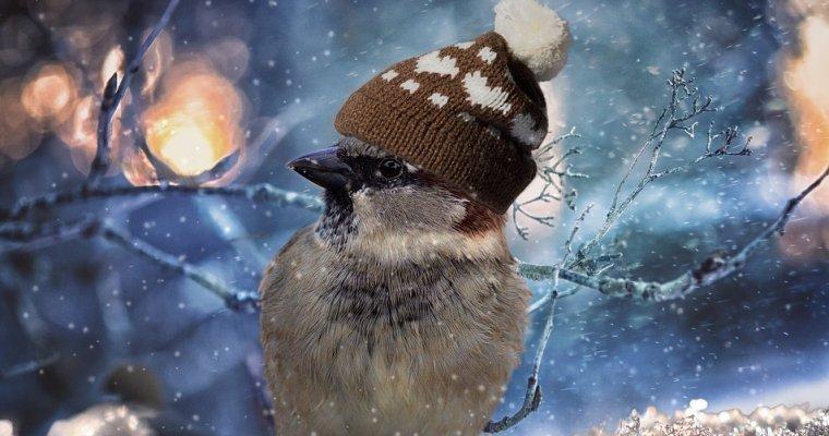 Кпонедельнику вУдмуртию придут морозы до-23°С