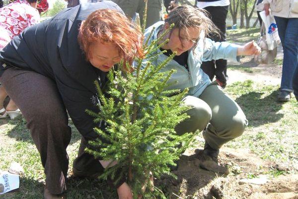 К чему снится елки сажать 12