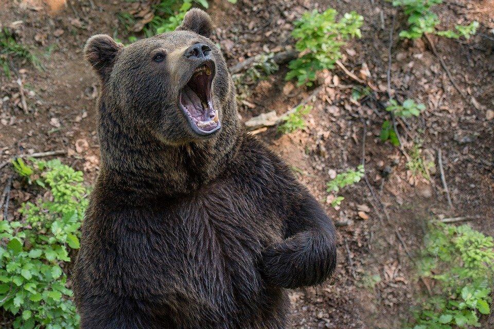 алиев свободно атакующий медведь фото августе, после загса