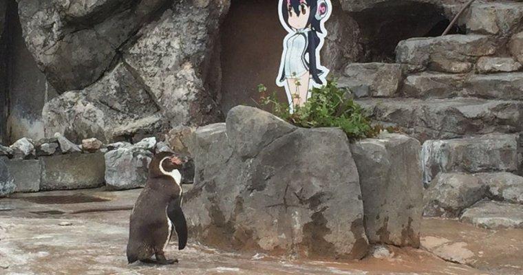 ВЯпонии пингвин «влюбился» вгероиню анимэ после разлуки ссамкой