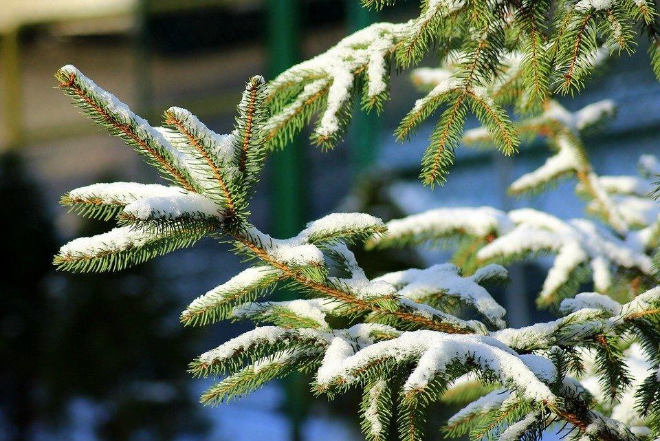 Предновогодние рейды по охране елок от незаконной вырубки стартовали в Удмуртии
