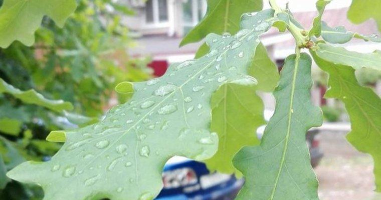 Рабочая неделя будет дождливой ипасмурной— Погода вКирове