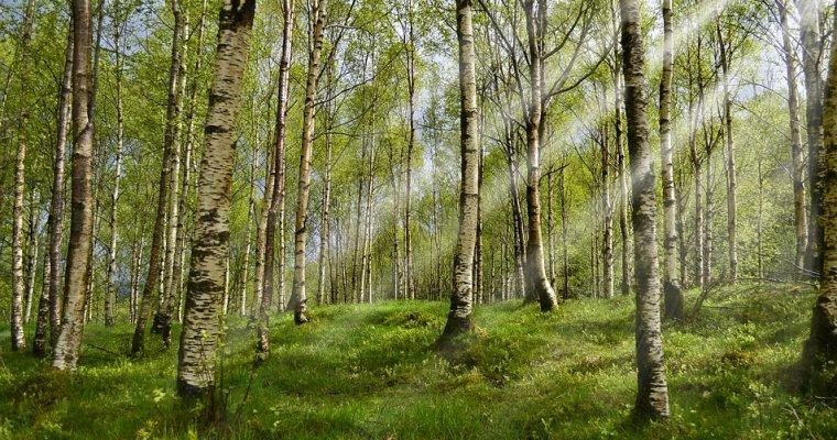 Неменее 8,5 тыс. граждан Удмуртии пострадали отукусов клещей