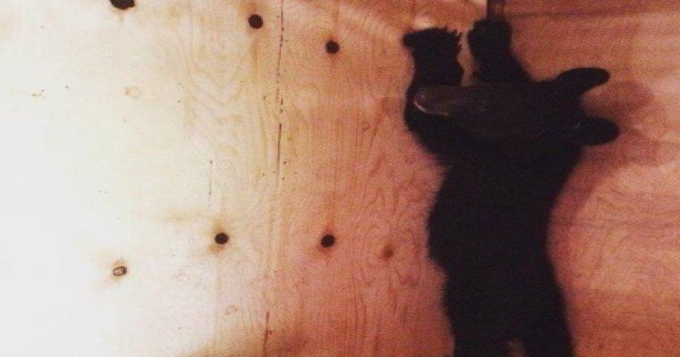 Медвежонок-сирота попал в отделение полиции в Приморье
