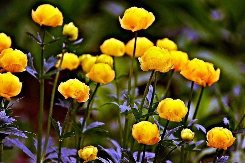 Италмас цветок
