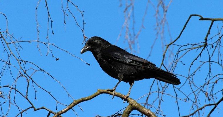 Трупы птиц найдены вИжевске поулице Дзержинского