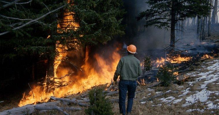 Трамп распорядился оказать федеральную помощь Калифорнии вборьбе спожарами