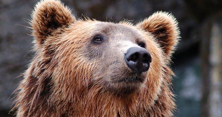 Медведь отобрал уохотника два ружья виркутской тайге