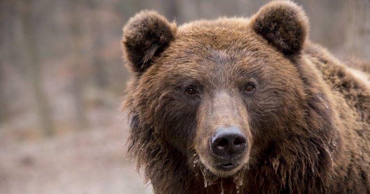 НаАляске медведь зашел валкогольный магазин