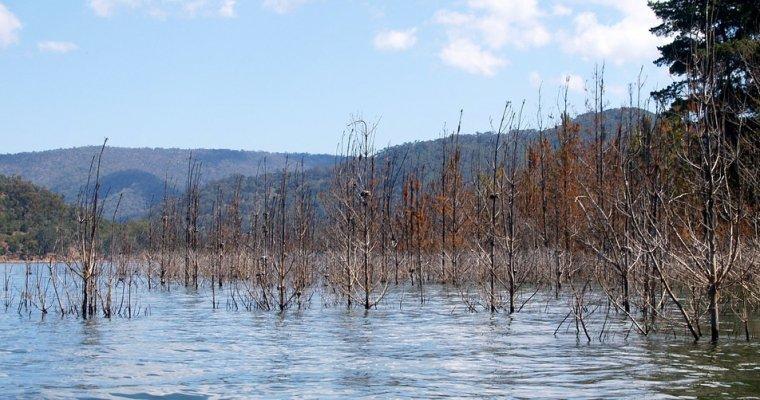В40 населенных пунктах Алтая паводок подтопил тысячу домов