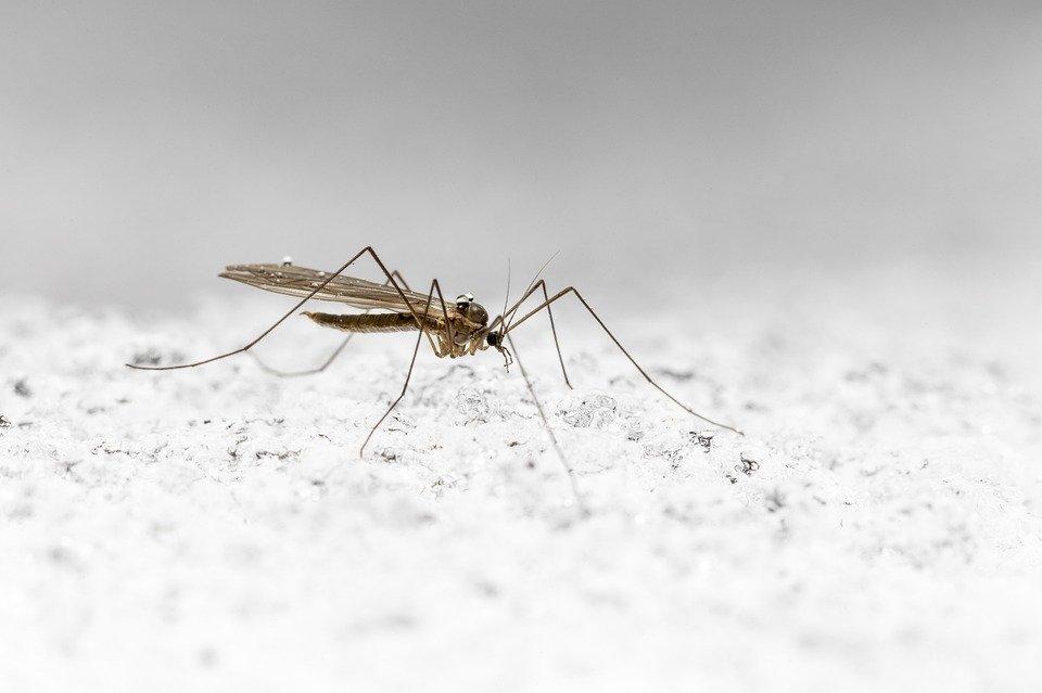 Минздрав Удмуртии проведет проверку по факту гибели от малярии приехавшего из Танзании туриста