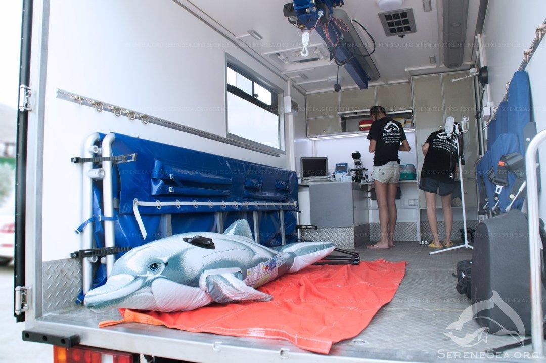 Дельфинов в Крыму будет спасать «скорая помощь»