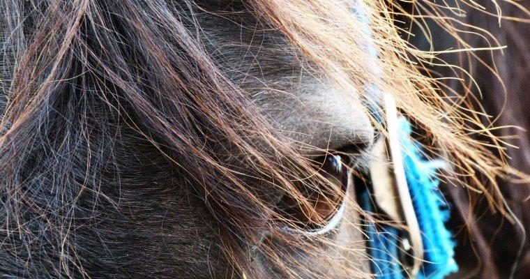 Британская журналистка приостановила  коня наскаку впрямом эфире