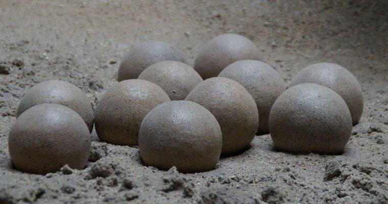 В Китае рабочий нашел яйца динозавра возрастом 70 млн лет