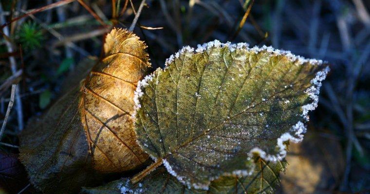 Первые заморозки ожидаются вУдмуртии вближайшие ночи