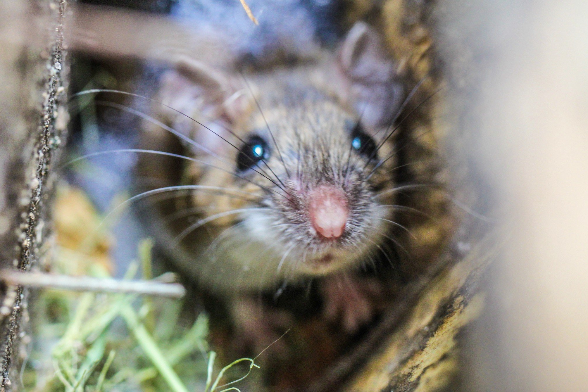 a-little-field-mouse-found-an-empty-birdhouse-and-decided-to-move-in_t20_2WWkb0.jpg